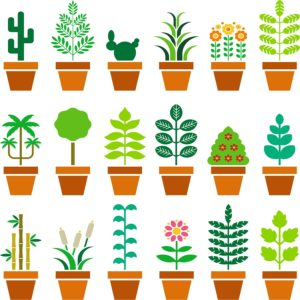 drzewa i kwiaty po angielsku