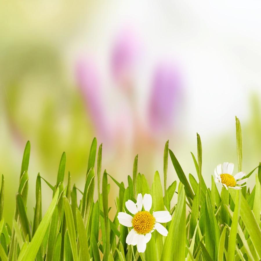 drzewa i kwiaty po niemiecku